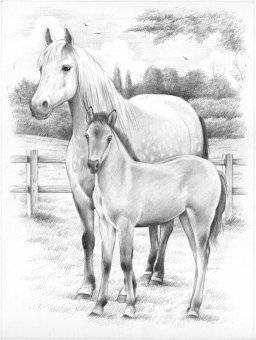 Sketch numbers PPSKM3 horses | Reeves
