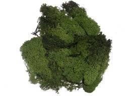 Ijslandmos donker groen 3803.606 | Hobby time