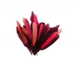 Plumes veren roodtinten 460198